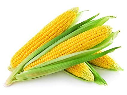 Corn Seeds Market by Market Data Forecast